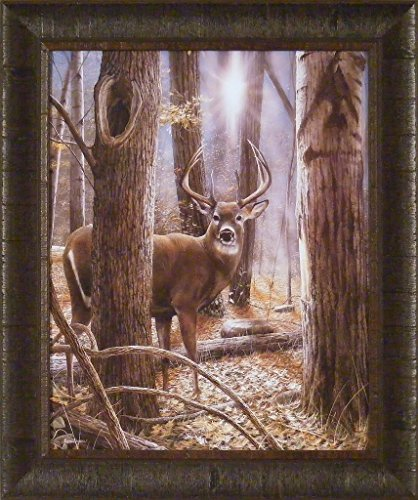 Woodland Sentry by Kevin Daniel 20x24 Whitetail Deer Buck Sunlight Trees Framed Art Print Picture