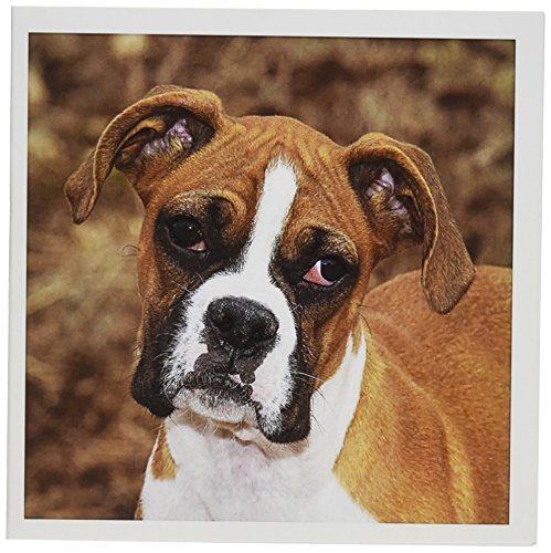 3dRose Purebred Boxer Dog Piperanne Worcester Greeting Cards, 6 x 6 Inches, Set of 6 (gc_140295_1)