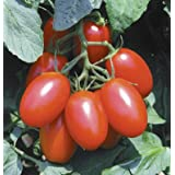 150+ Organic Juliet Tomato Seeds - DH Seeds - Free Seeds Included