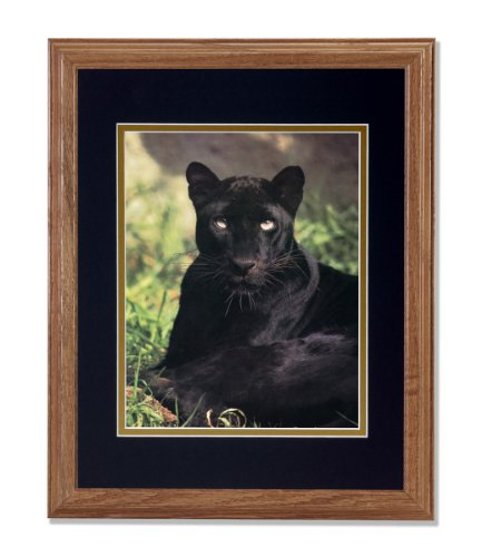 Up Black Close Panther (Black Panther Cat Laying in Grass Close Up Photo Wall Picture B/G Matted 13x16 Oak Framed Art Print)