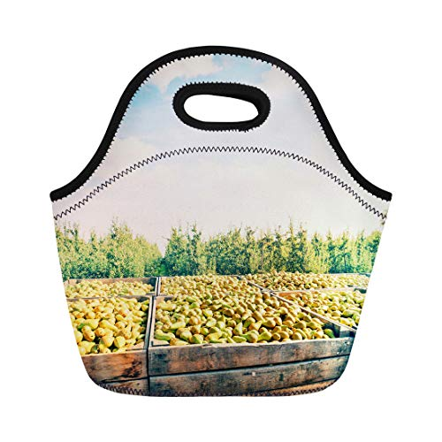 Semtomn Neoprene Lunch Tote Bag Blue Fruit Freshly Harvested Pears in Wooden Crates Green Reusable Cooler Bags Insulated Thermal Picnic Handbag for Travel,School,Outdoors,Work