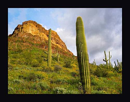 Organ Pipe Cactus Organ Pipe Cactus National Monument, Sonoran Desert, Arizona by Tim Fitzharris - 13
