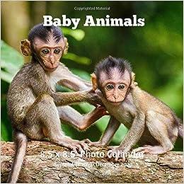 December 2020 Calendar Animals Baby Animals 8.5 X 8.5 Calendar September 2019  December 2020