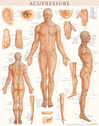 Acupressure-Laminated (Charts And Acupuncture Posters)