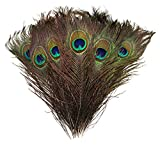 Natural Peacock Feathers 10''-12'' (30) Wedding Christmas Halloween Décor by Blisstime