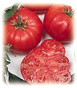 Tomatoes, Beefsteak Tomato 25 Seeds - Impressive! ,ORGANIC, NON-GMO, USA PRODUCT. PACKED BY JACOBS LADDER - Beefsteak Snack