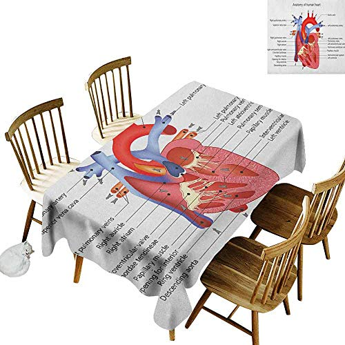 DONEECKL Educational Oil-Proof Tablecloth Seamless Design Medical Structure of The Hearts Human Body Anatomy Organ Veins Cardiology Coral Red Blue W60 xL102
