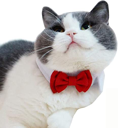 Red Bandana Cat Bow Tie  Western Bow Tie  Gift for Cat  Lover  Small Dog Bow Tie  Bowtie for Cats  Cat Gift for Cats
