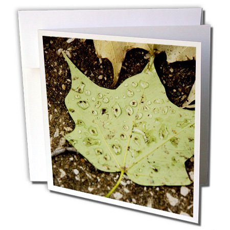 Ice Bucket - Nature - Beautiful Image of Green Leaf with Rain Drops on it - 6 Greeting Cards with envelopes (gc_211747_1)