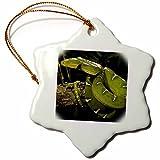 Best 3dRose Boas - 3dRose orn 94190 1 Emerald Tree Boa Snake Review