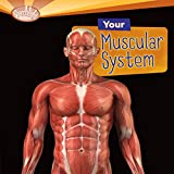 Bargain Audio Book - Your Muscular System
