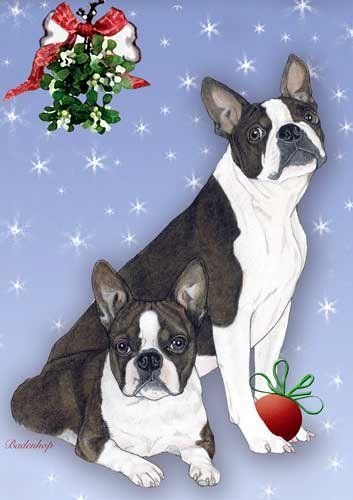 boston terrier christmas cards 10 holiday cards with red envelopes adorable