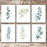 Botanical Prints Wall Art - Eucalyptus Leaves - (Set of 6) - Unframed - 8x10s
