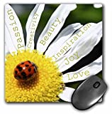 3dRose LLC 8 x 8 x 0.25 Inches Mouse Pad, Inspirational Words Ladybug on a Daisy Affirmations Flowers (mp_40136_1)