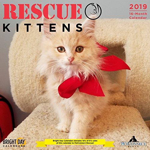 Rescue Kittens 2019 Wall Calendar
