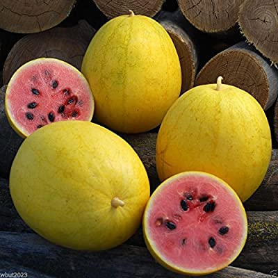 Watermelon seeds - Golden Midget (Citrullus lanatus) Non-GMO Heirloom ! (50 Seeds) : Garden & Outdoor