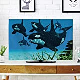 "LCD TV Cover Lovely,Whale,Pod of Killer Whales Swim Along a Reef Looking Compatible Fish Prey Ocean Picture Print,Sky Blue Green,Diversified Design Compatible 60"" TV"