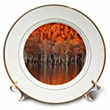 3dRose Danita Delimont - Autumn - USA, Georgia, Twin City, Cypress trees in the fall at sunset. - 8 inch Porcelain Plate (cp_278906_1)