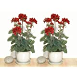 "2 x 18"" Geranium Plants, Artificial Flowers (WITHOUT POTS)"