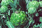"Imperial Star Artichoke Plant-Delicious Perennial Vegetable-Easy to Grow- 4"" Pot"