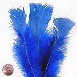 Large Aegean Blue Turkey Flat Feather (50/Pack)