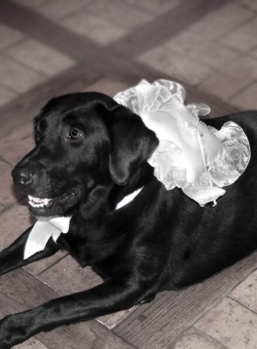 Wedding Ring Bearer Pillows : Large Dog Ring Bearer Pillow / White - Beverly Clark Ring Pillow