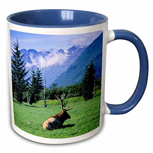 (3dRose Danita Delimont - Deer - Elk bull laying down in a meadow with mountains, Portage, Alaska - 15oz Two-Tone Blue Mug (mug_229396_11))