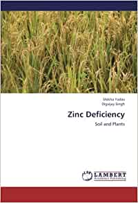 Zinc deficiency soil and plants shikha yadav digvijay for Soil zinc deficiency