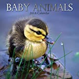 2018 Baby Animals Calendar - 12 x 12 Wall Calendar - With 210 Calendar Stickers