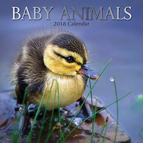 2018 Baby Animals Calendar - 12 x 12 Wall Calendar - With 210 Calendar Stickers - Baby Wall Calendar