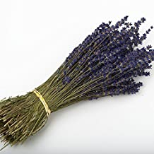 LAVENDER BUNCH 250 STEMS DRIED FLOWERS 30CM WEDDING FAVOURS OR DECORATIONS (5 Bunches, Deep Blue) by D