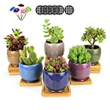 GemEwell 2.3 inch Ceramic Ice Crack Zisha Raised Serial Succulent Plant Pots/Cactus Pot Flower Pot/Container/Planter Set of 6 (with Bamboo Trays + Mushrooms +Hole mesh Pads)