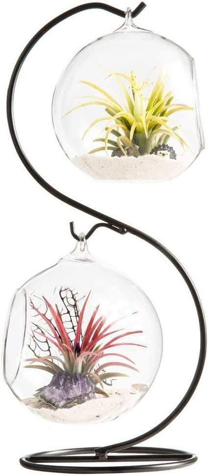 Mkono Clear Glass Vase Hanging Plant Terrarium with Black Metal Stand Tabletop Display Potted Stand for Air Plants Succelent Home Office Decor, S-Shape, 2 Globes