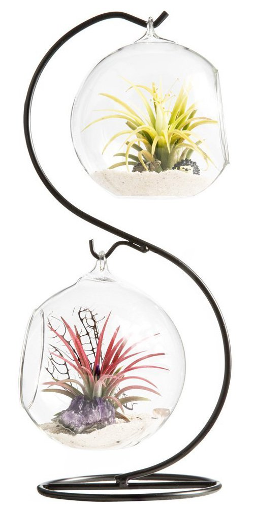 Mkono Clear Glass Vase Hanging Plant Terrarium with Black Metal Stand for Air Plants Succelent, S-shape, 2 Globes