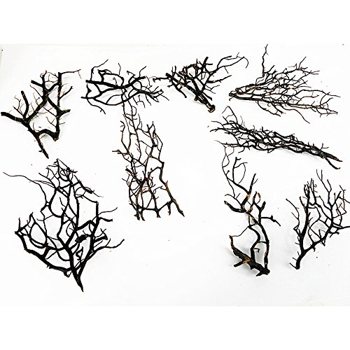 Thick Branch of Fan Little Black Sea Fan Real Coral Marimo Terrarium Accessories Aquarium DecorationSmall (Aquarium Branch)