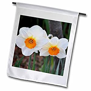 PS Flowers - White Daffodils - Flowers of Spring - Photography - 12 x 18 inch Garden Flag (fl_52762_1)
