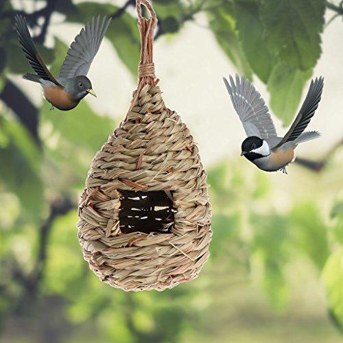 Qiman Natural Hierba EI Nido de Pájaro Jaula en Exteriores ...