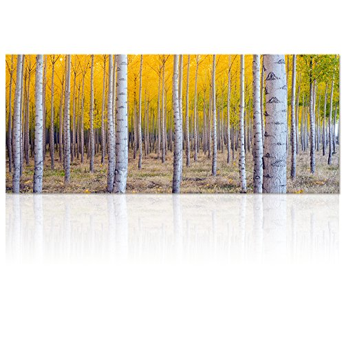 Large Framed Nature Prints: Amazon.com