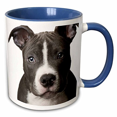3dRose 4240_6 American Pit Bull Terrier Puppy-Two Tone Blue Mug 11 oz Multicolored