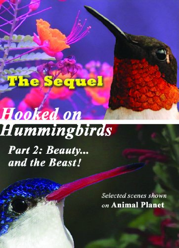 Hooked on Hummingbirds Part 2: Beauty...and the Beast