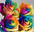 Colorful Rainbow Rose 200 pcs Orchid Ideal Garden Potted Seeds Rare Flower Plant Seeds