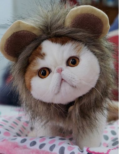 Lion Mane Wig Cat Costume - Soft and Comfortable Lion Hair Accessories Funny Pet Dress Size Small 11