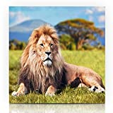 "Krezy Decor Canvas Print Wall Art Painting 8""x10"" Wild Safari Big Lion Lying On Savannah Species Grass Nature Africa African Kenya King Design Pride Gallery Wrapped Artwork Home Living Room Office"