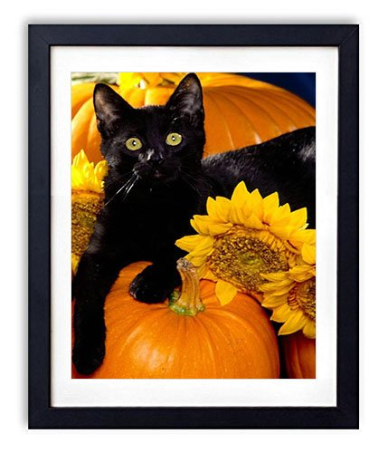 Black Wood Framed Wall Art - Cat Black Pumpkin Sit