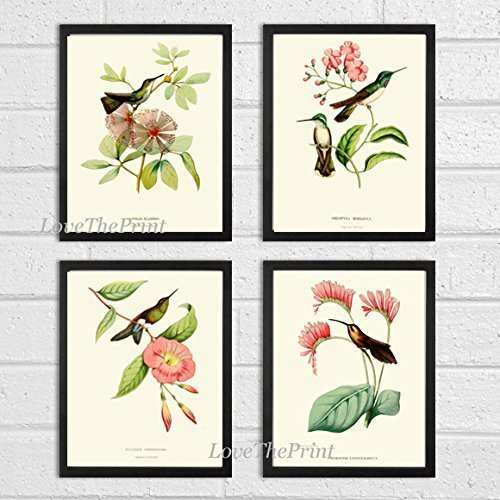Hummingbirds Botanical Print Set of 4 Art Antique Beautiful Tripical Birds Flowers Plants Illustration Home Room Decor Wall Art Unframed