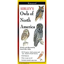 Sibley's Owls of North America - Folding Guide