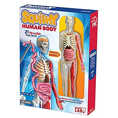 SmartLab QPG Lab for Kids, Squishy Human Body, Grade 3-8: Toys & Games