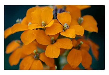 Irocket Interieur Tapis De Sol Tapis Orange Fleurs De Printemps