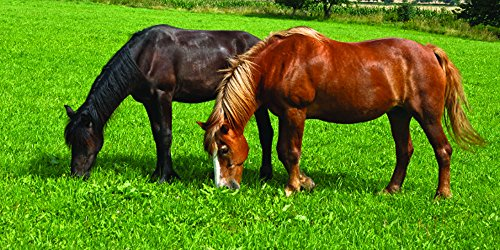 Nature's Seed PB-IWH-2.5-A 2.5 Acre Intermountain West Horse Pasture Blend