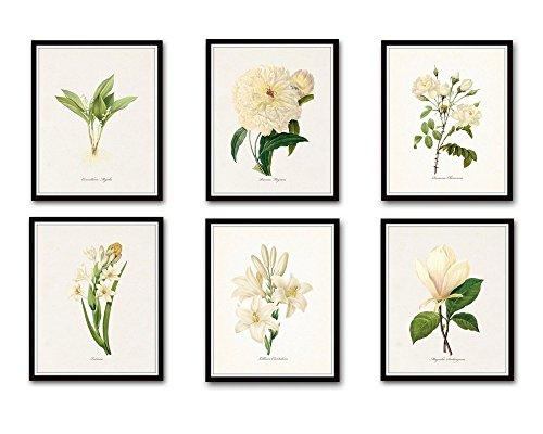 Redoute White Botanical Print Set 6 Giclee Fine Art Prints - Unframed